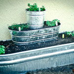 How to Build a Raised Herb Garden Out Of Galvanized Tubs